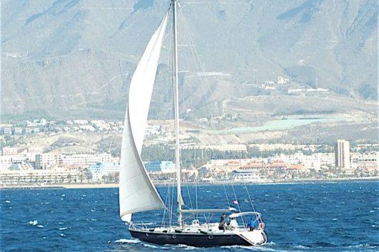 Blue Jack sail whales dolphins